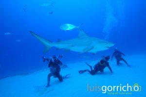 tiburón toro y buceadores