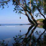 árboles reflejándose en el agua de la piscina en Bali