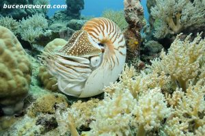 fólsil viviente marino