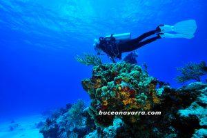 buceadora en un arrecife
